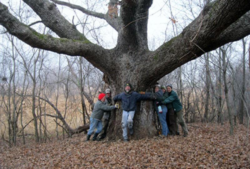 Group hug of Betty White (Oak)