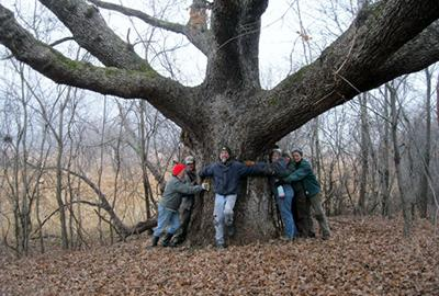 Group hug of Betty White (Oak)
