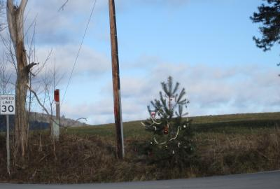 Photo of a small pine tree with some holiday ornaments on it