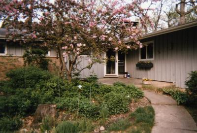 Flowering crabapple tree in front of house