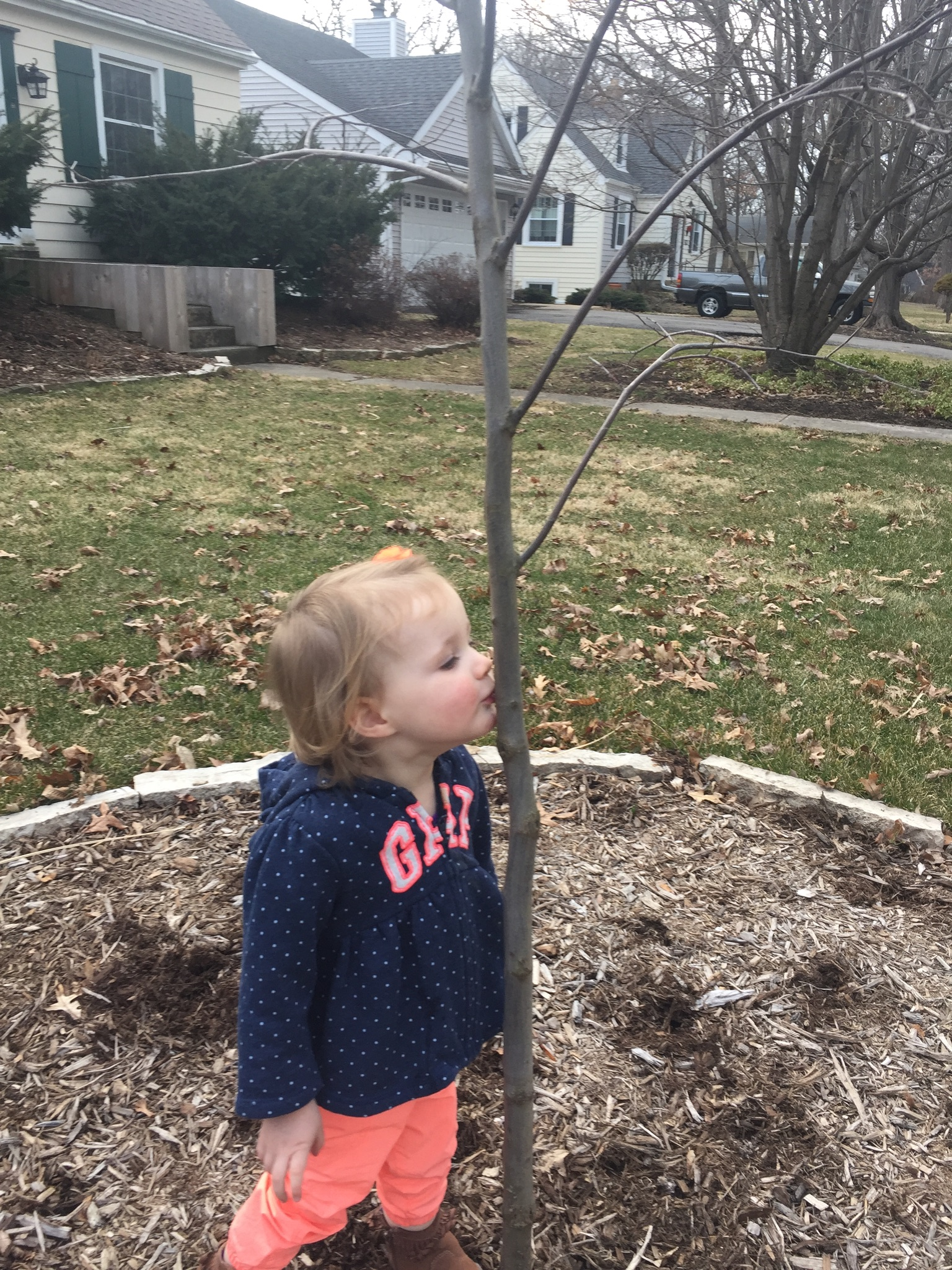Small girl kissing trunk of redbud sapling